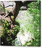 Hanging Tree Acrylic Print
