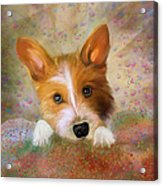 Hankie A Corgi And Westi Mix Cute Dog Acrylic Print