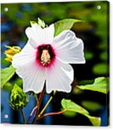 Happiness Shared Is The Flower Acrylic Print