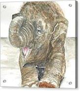 Happy Baby Elephant Acrylic Print