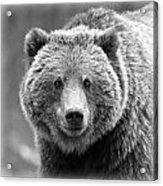Happy Bear Acrylic Print