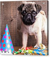 Happy Birthday Cute Pug Puppy Acrylic Print by Edward Fielding
