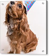 Happy Birthday Dog Acrylic Print by Edward Fielding