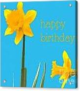 Happy Birthday Jonquils Acrylic Print