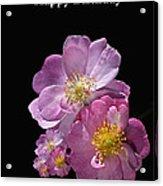 Happy Birthday Pink Roses Acrylic Print