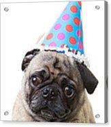 Happy Birthday Pug Card Acrylic Print
