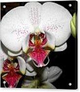 Happy Blooms Acrylic Print by Kim Galluzzo Wozniak