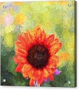 Happy Colorsii Acrylic Print