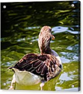 Happy Duck Acrylic Print