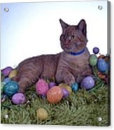Happy Easter Acrylic Print by Michael Sokalski