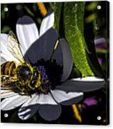 Happy Honey Bee Acrylic Print