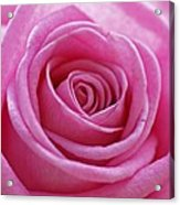 Happy Pink Acrylic Print