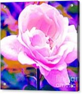 Happy Rose Acrylic Print