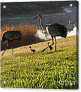 Happy Sandhill Crane Family - Original Acrylic Print