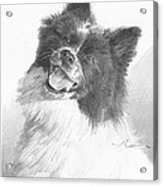 Happy Sled Dog Pencil Portrait Acrylic Print