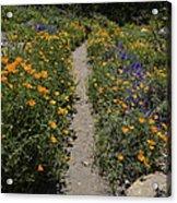 Happy Trails Acrylic Print