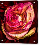 Happy Valentine's Day - 1 Acrylic Print