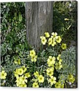 Happy Yellow Flowers Acrylic Print