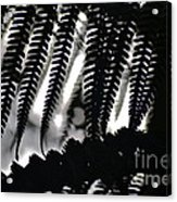 Hapu'u Fern Silhouette Acrylic Print