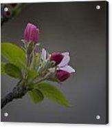 Har-gilo Flowers 1 Acrylic Print