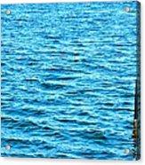 Harbor Markers Acrylic Print
