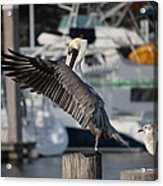 Harbor Pelican And Gull Acrylic Print