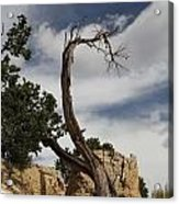 hard life at the Grand Canyon Acrylic Print