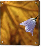 Hare Bell And Gold Leaf Acrylic Print by Roger Snyder