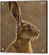Hare Portrait I Acrylic Print