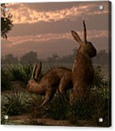 Hares In The Wetlands Acrylic Print