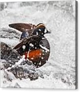 Harlequin In The Rapids Acrylic Print