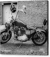 Harley In Black And White Acrylic Print