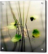 Harmony Zen Photography II Acrylic Print