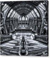 Harry Potter Meets Escher And Darwin. Acrylic Print