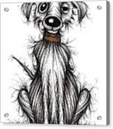 Harry The Dog Acrylic Print