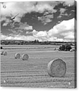 Harvest Fly Past Black And White Square Acrylic Print