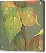 Harvest Grapevine Acrylic Print