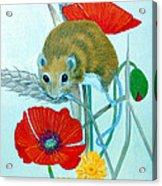 Harvest Mouse Acrylic Print
