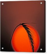 Harvest Sunset - Fs000416 Acrylic Print by Daniel Dempster