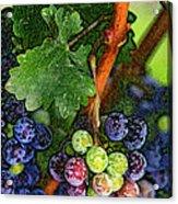 Harvest Time 1 Acrylic Print