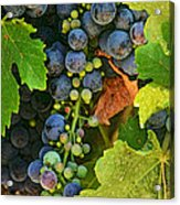 Harvest Time 2 Acrylic Print
