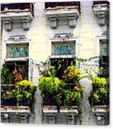 Havana Windows Acrylic Print