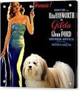 Havanese Art - Gilda Movie Poster Acrylic Print