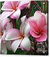 Hawaii Plumeria Acrylic Print