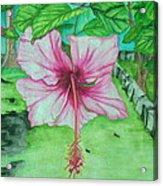 Hawaiian Healing Acrylic Print