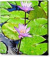 Hawaiian Lily Pads And Flowers_01 Acrylic Print