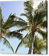 Hawaiian Palm Trees Acrylic Print