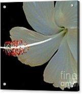 Hawaiian Pearl Acrylic Print