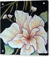 Hawaiian Pua Acrylic Print