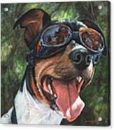 Hawg Dawg Acrylic Print